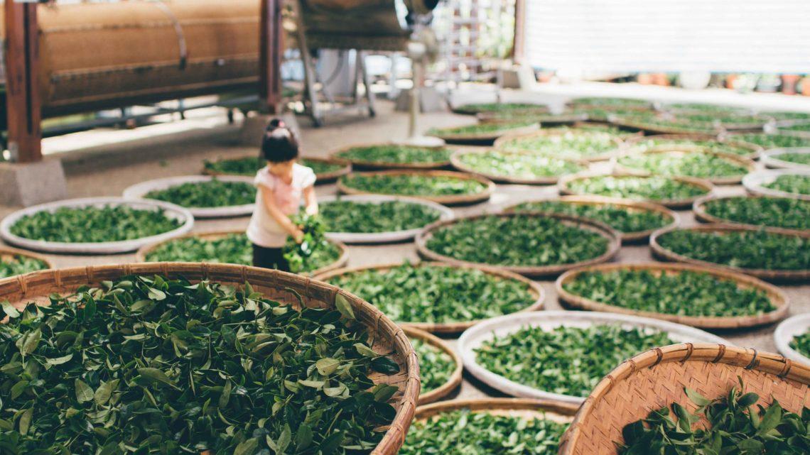 Druhy zeleného čaje